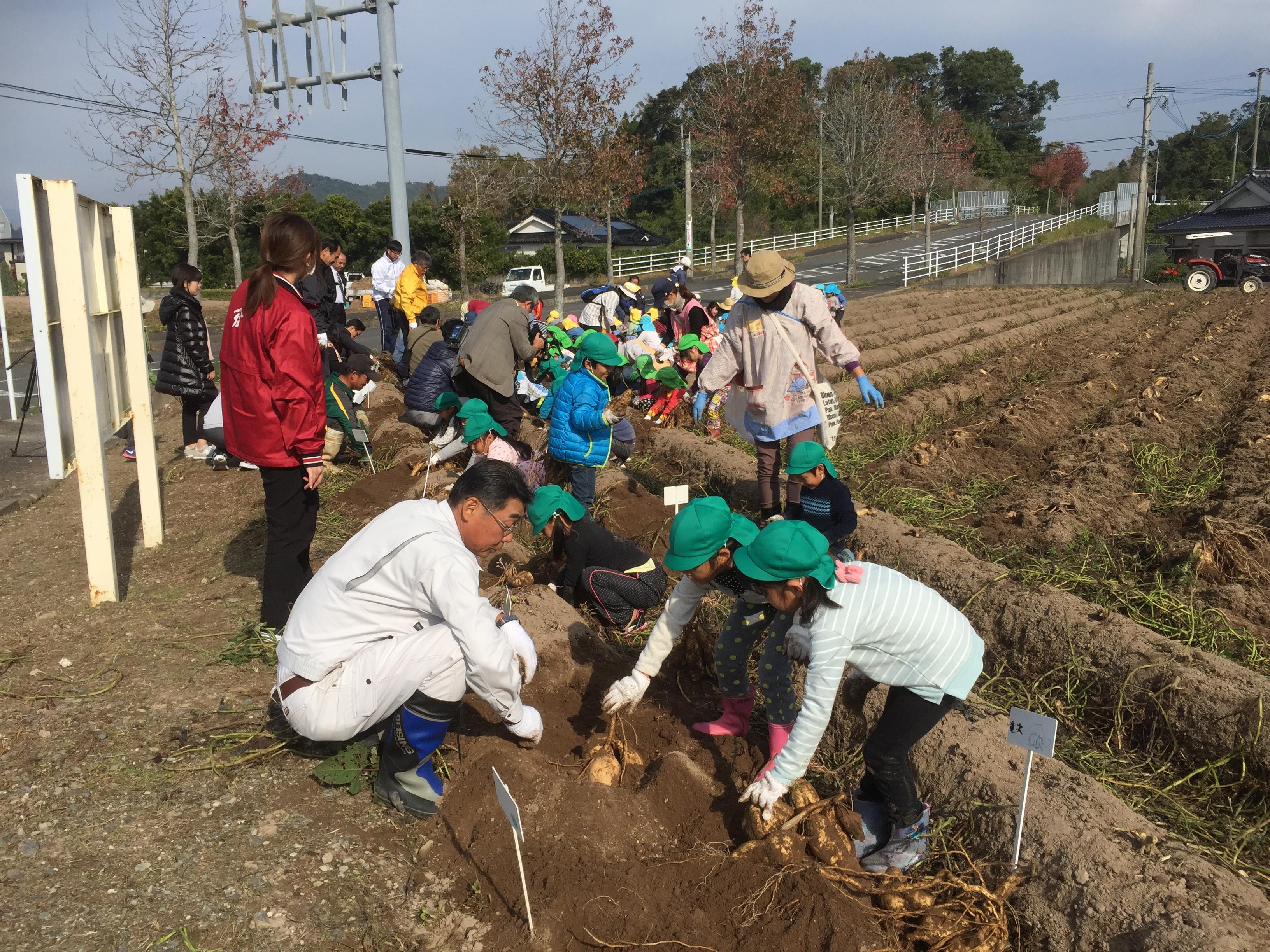 「伝兵衛さんの芋畑」で大収穫!