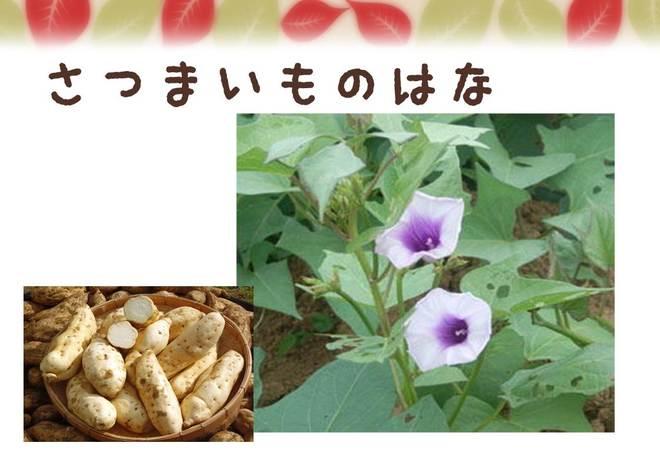 denbee_kura_86_6.JPG